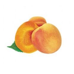 Purée abricot ( 6Kg )