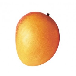 Purée mangue ( 6Kg )
